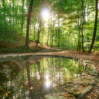 Teichgrundquelle in der Dresdener Heide